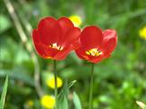 flower_quarter