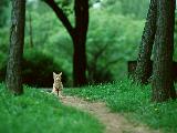 cat_quarter